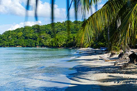 Palm tree Leaves and Beach at Providencia